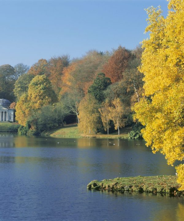 The light golden leaves of a Liriodendron tulipifera (tulip tree) on an island in the lake at Stourhead. The 18th century Pantheon on the far lakeside is framed by autumn tinted trees.